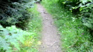 Footpath in the wood. video