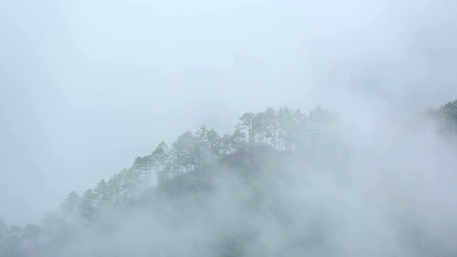forest and mountain in the mist.landscape of valley at sunset video