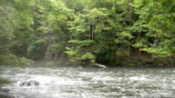 Forest and River video