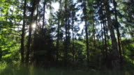 Forest and trees through the car window 4K video