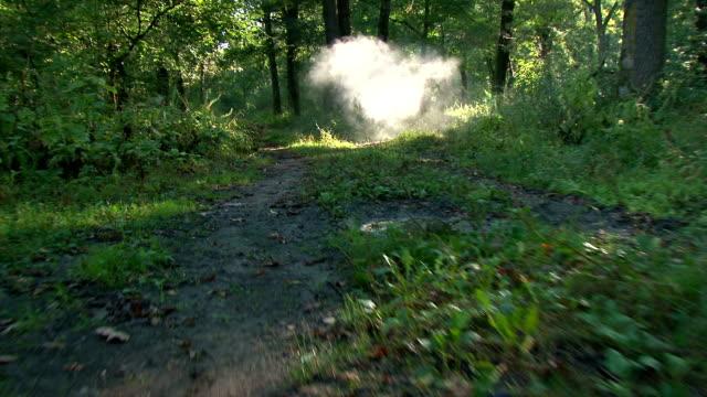 Forest at sunrise - steadicam shot video