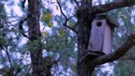 Forest birdhouse video