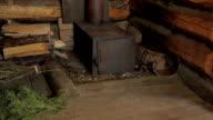 forest cabin inside video