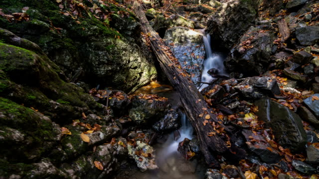 Forest creek with leaves in autumn time lapse dolly shot video