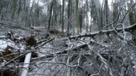 Forest Damage From The Ice Storm video