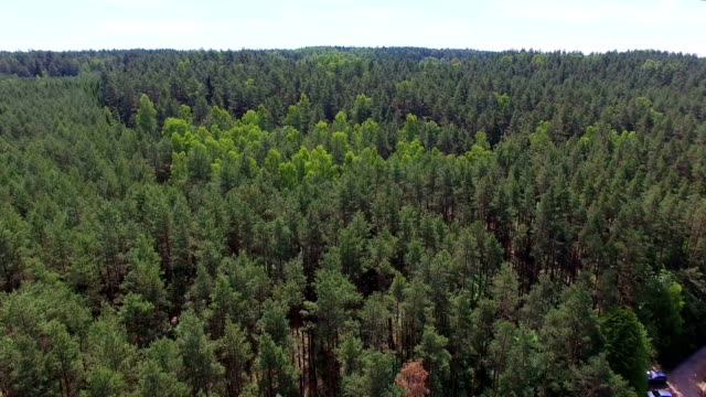 Forest dolly shot aerial video