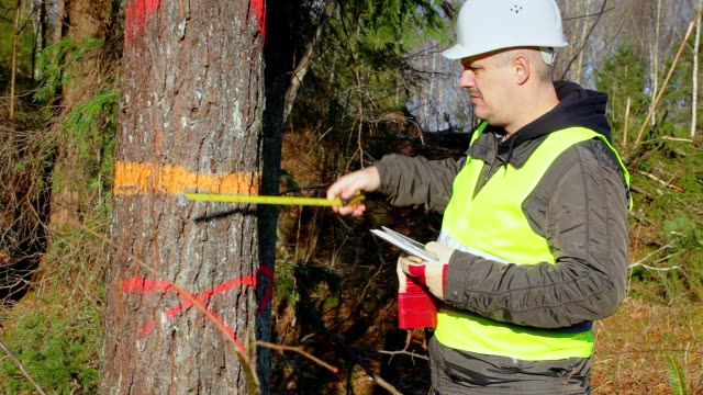 Forest engineer with a tablet PC and tape measure near tree video
