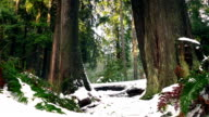Forest Ferns And Trees In Thick Snow video
