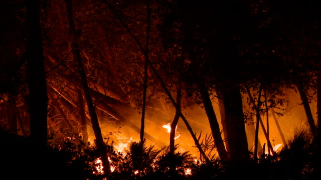Forest fire at night video