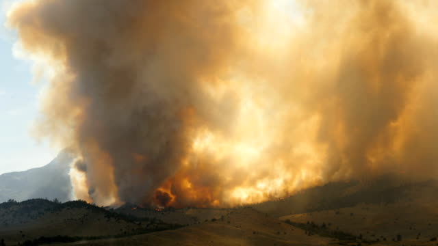 Forest Fire Burning Mountainside video