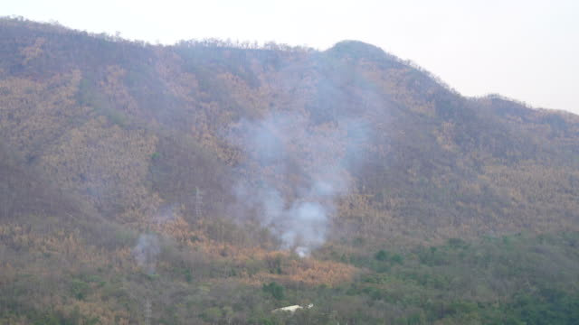 Forest Fire Burning video