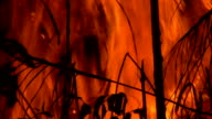 Forest Fire Close Up video