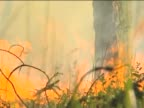 Forest fire. video