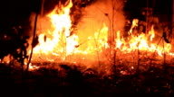 Forest Fire video