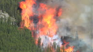 Forest fire with huge flames video