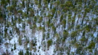 Forest from helicopter video