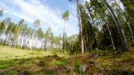 forest glade in sunny day video