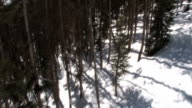 Forest, High Angle video