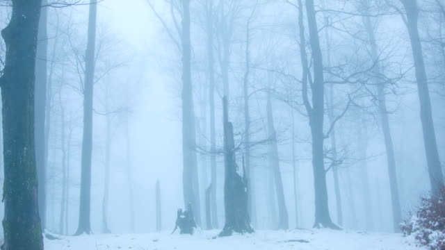 Forest in Fog video