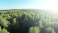 Forest in sunny day aerial. Wood and blue sky view fron the sky. Aerial view on beautiful big forest in autumn, in the fall video