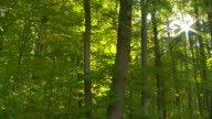 Forest In The Sunlight Tracking Shot video