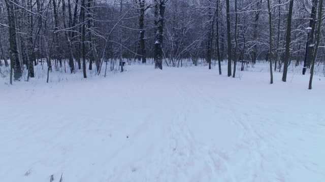 Forest in winter video