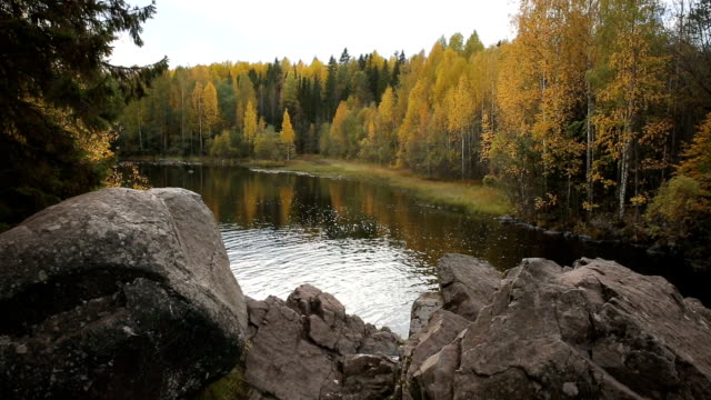 Forest lake in Northern Europe in autumn. video