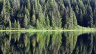 HD forest lake reflection video