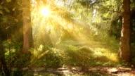 Forest landscape HQ1080p video