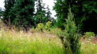 Forest Landscape video