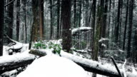 Forest Logs Buried In The Snow video