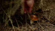 Forest Mushroom Foraging video