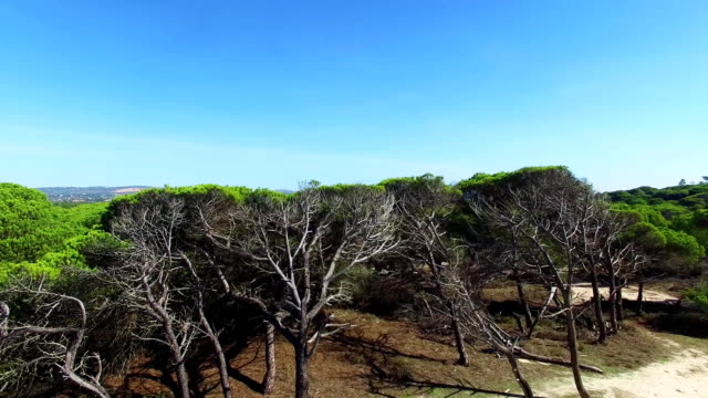 Forest Portugal Algarve aerial video