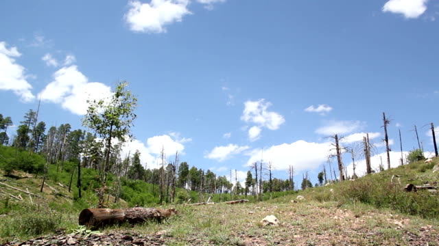Forest regrowth and renewal video