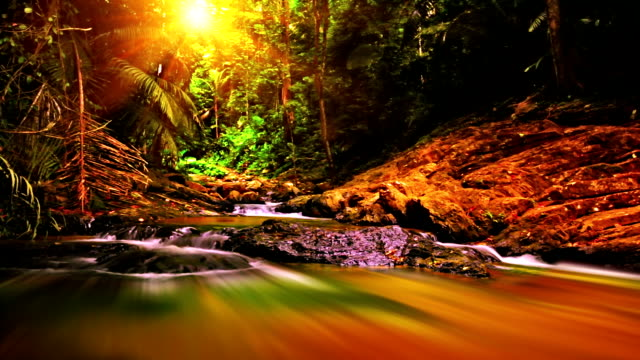 Forest river. video