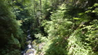 Forest river video