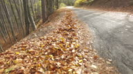 forest road, strewn with autumn leaves video