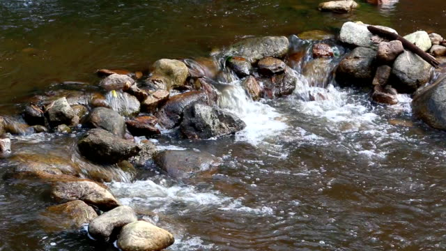 Forest stream running over rocks video