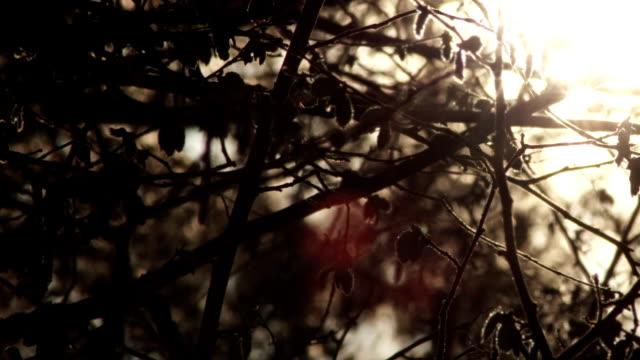 Forest , Sunlight video