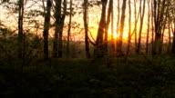 Forest sunrise timelapse. Spring time. video