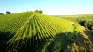 AERIAL Forest Surrounding The Vineyard video