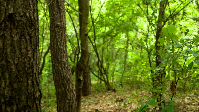 Forest thickets in the wild. video