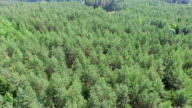 Forest tilt down shot aerial video