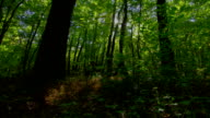 Forest time lapse with motorized slider, moving shadows. HDR Raw video