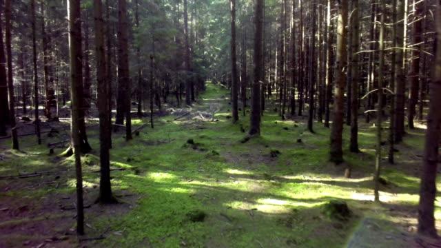 Forest Track Aerial Flyover Shot video