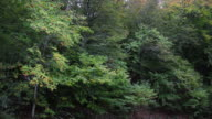 Forest Trees - Arboles del Bosque video