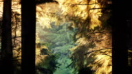 Forest Trees Glow In Evening Sunlight video