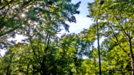 Forest trees video