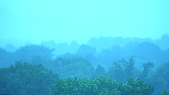 HD Forest Treetops in Rain Panning_1 (1080/24P) video