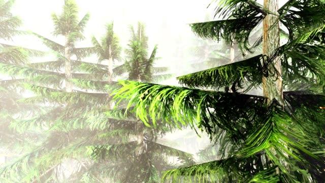 Forest vegetation video